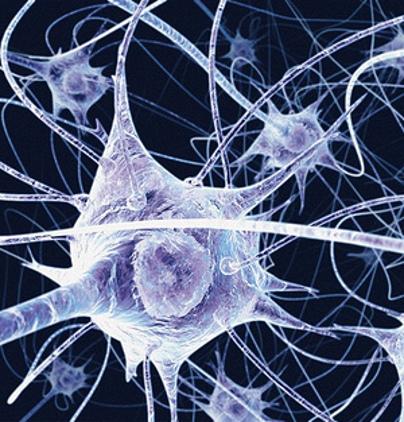 Neuroni e autismo nuove scoperte angsa lazio onlus - Neuroni specchio e autismo ...